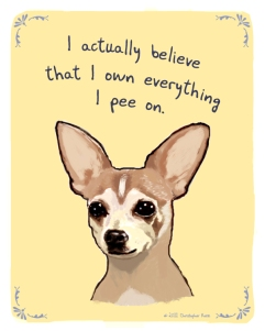 New-Chihuahua-pee-tan