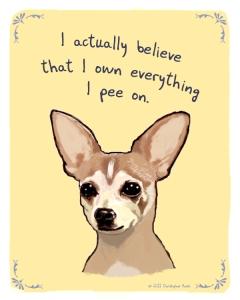 New_Chihuahua_pee_tan