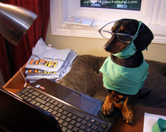 dachshund-on-computer